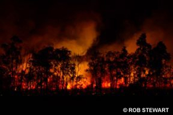 Forest fires release trees' stored carbon back into the air as carbon dioxide, making deforestation the second largest contributor of greenhouse gases to global warming, worldwide