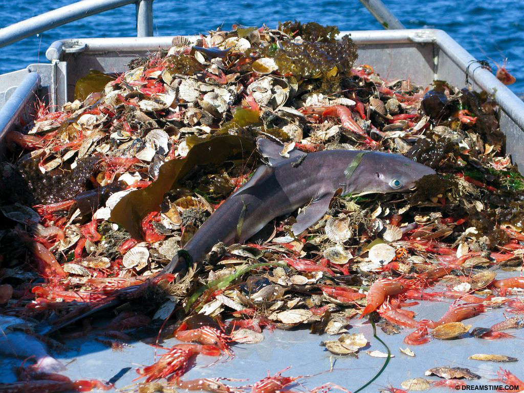 Bycatch with shark
