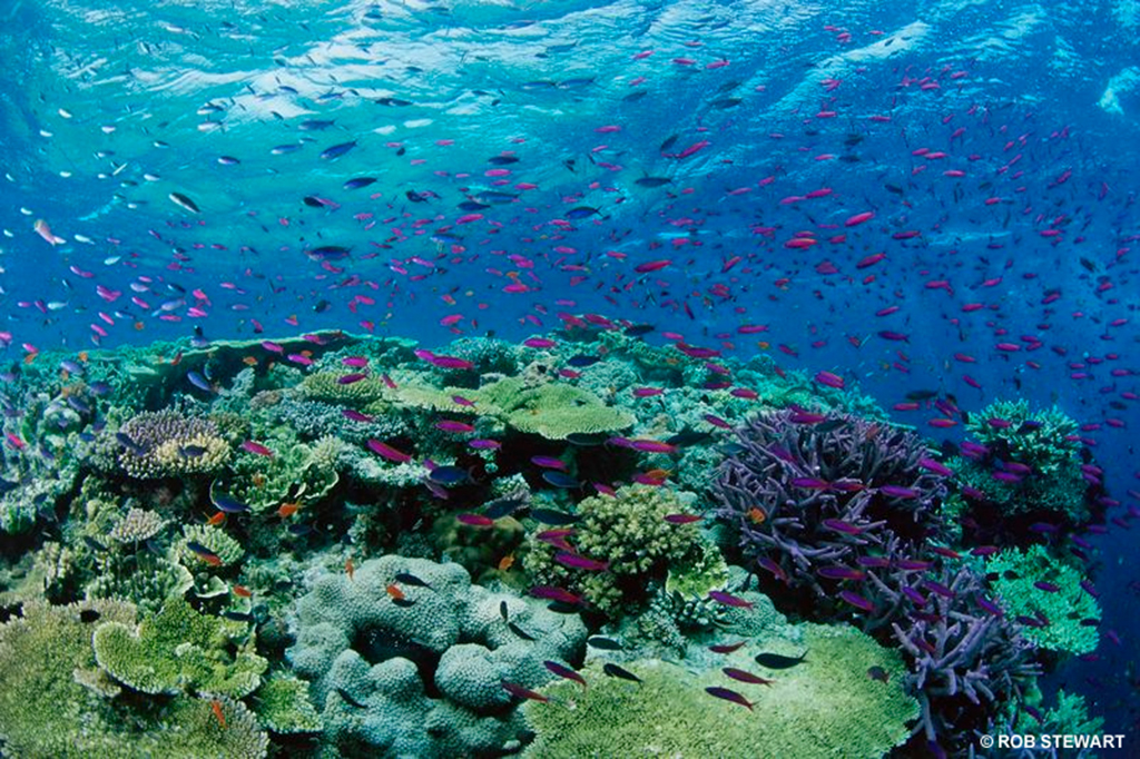 Coral Reef shows biodiversity