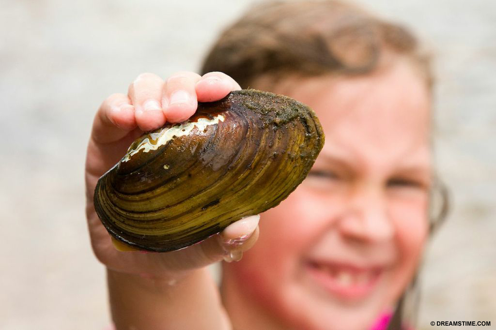 Shellfish, like this clam, are affected by rising acidity levels