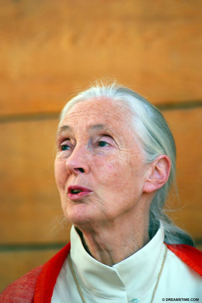 Jane Goodall lecturing about chimpanzees in Hungary