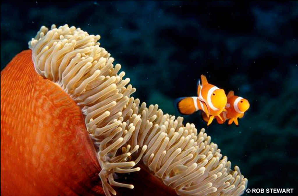 Acidification threatens coral reefs, which are home to clownfish and thousands of other marine species.