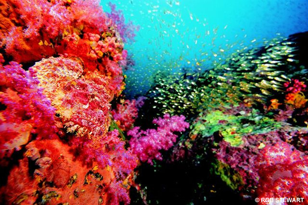 A single reef in the Coral Triangle, like this in Papua New Guinea, could have 3500 species living on it.