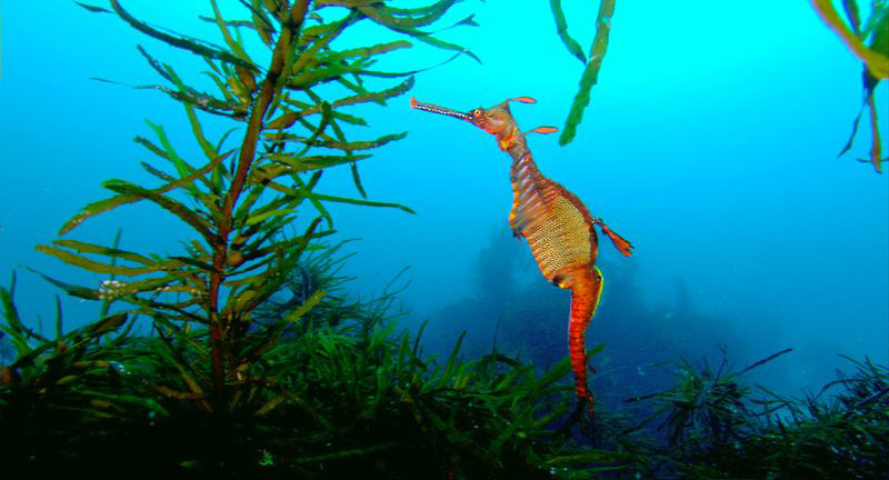 Trawling has major direct and indirect impacts on seagrass beds © David Hannan
