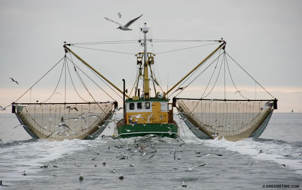 Shrimp trawling is one of the most wasteful industries for bycatch