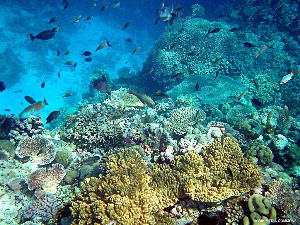 Study reef in Papua New Guinea