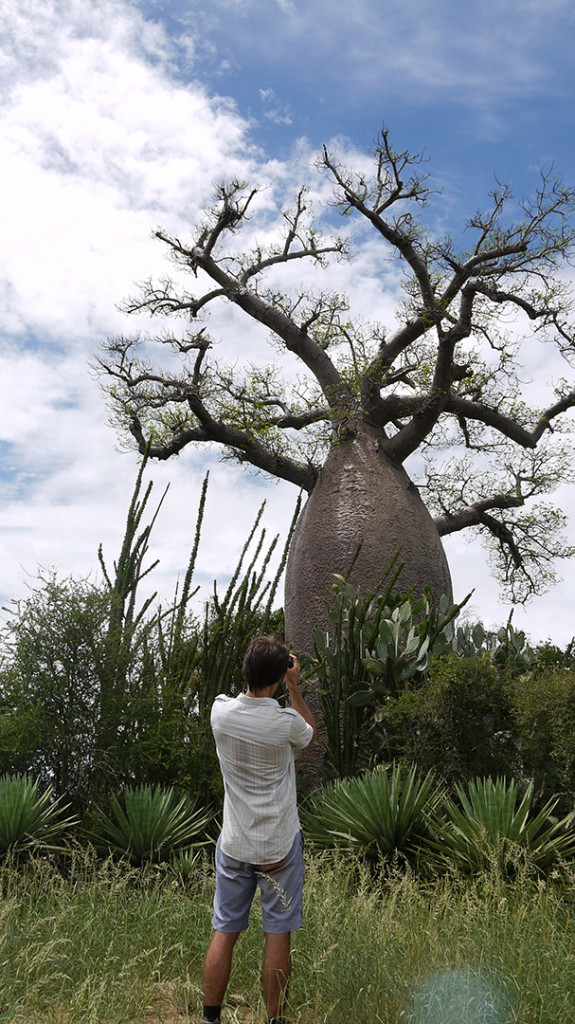 Rob photographing a 1500-year-old Baobab tree in Madagascar. When this was a sapling there were 300 million people on earth. Photo © Paul Wildman www.builtbywildman.com from the documentary film Revolution.