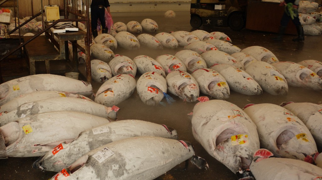 Each of these tuna in Tokyo is worth at least $50,000. Bluefin tuna populations are estimated to have declined by more than 90 per cent.