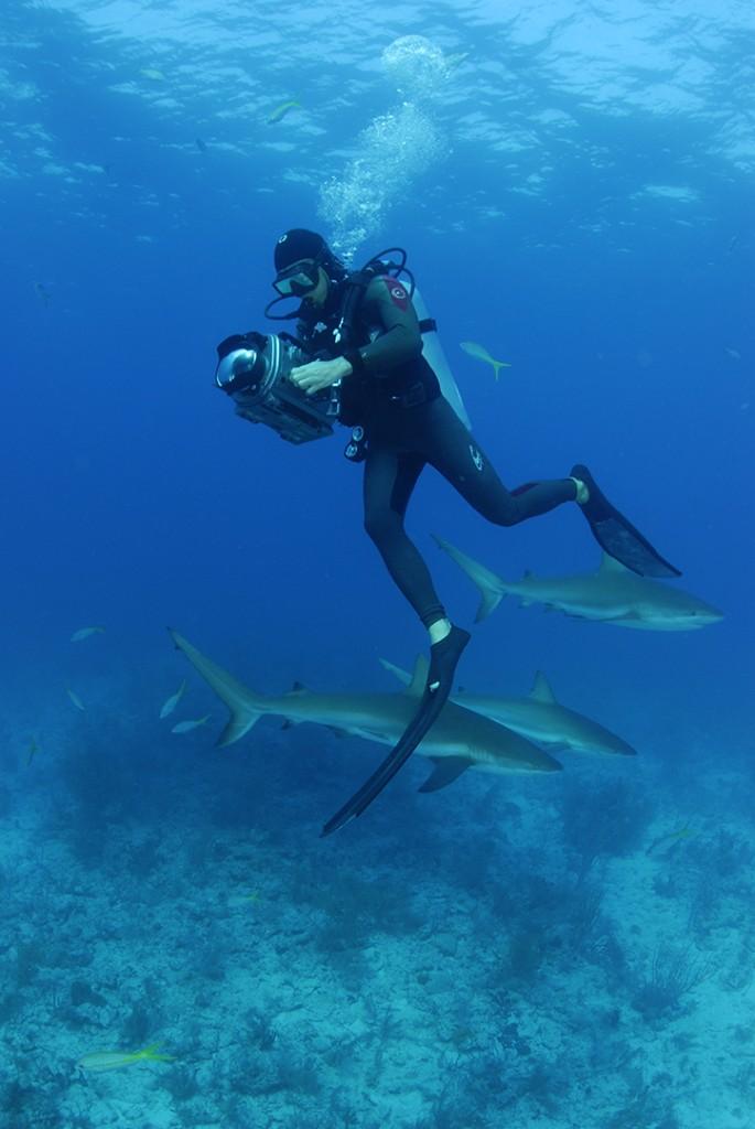 Filming Caribbean reef sharks Bahamas.