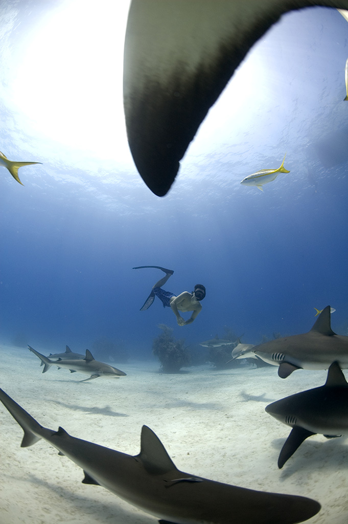 Freediving with caribbean reef sharks Bahamas. Photo © Veruschka Matchett