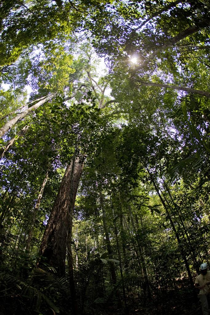 Rainforest, Brazil. Photo © Brennan Grange. From the documentary film Revolution.