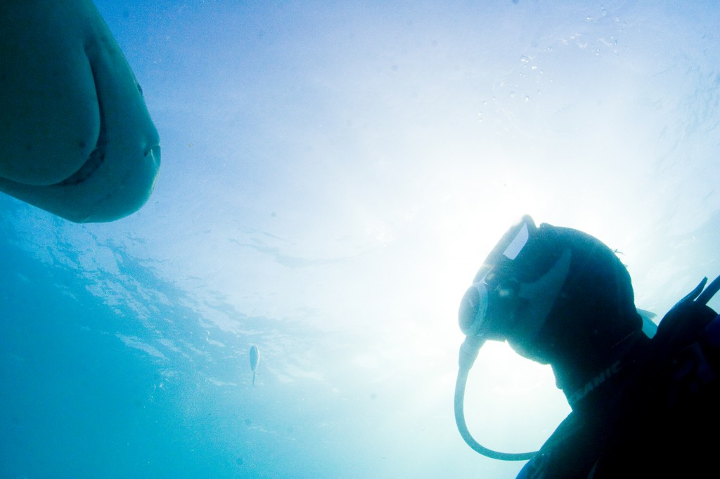 Filming lemon sharks in the Bahamas. From the documentary film Revolution.